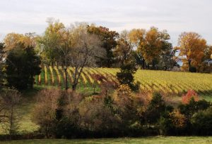 Barboursville Vineyards in late autumn, 2014 (from the parking lot next to the winer